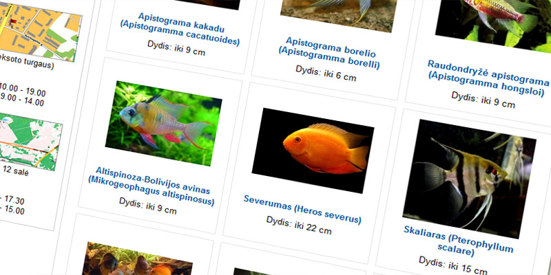 akvazoo_aquariums_pets_3.jpg